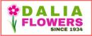 פרחי דליה בירושלים