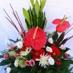 Flowers המרהיב
