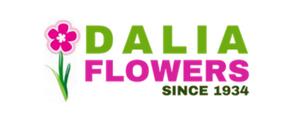 פרחי דליה - בירושלים