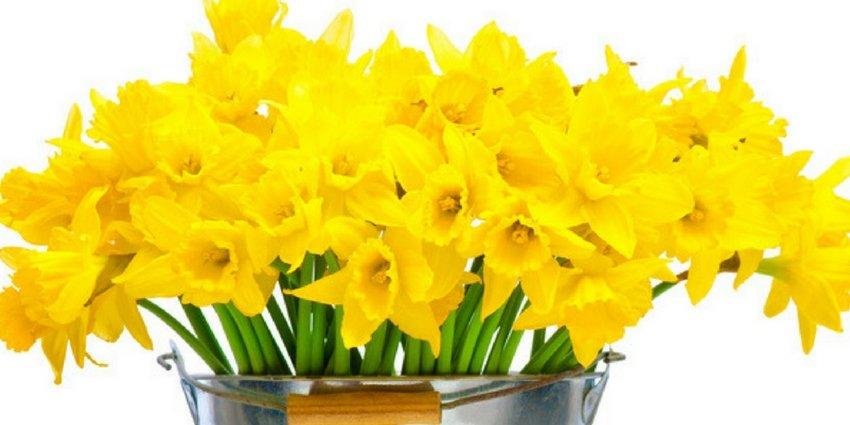 פרחים באשדוד