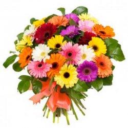 Flowers גרברות ציבעוני