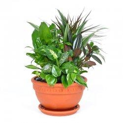 קוקטיל צמחים ירוקים