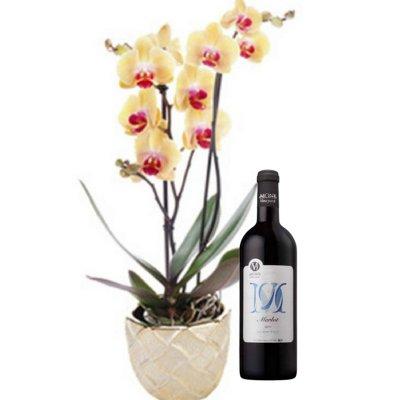 דיל סחלב בעציץ + יין